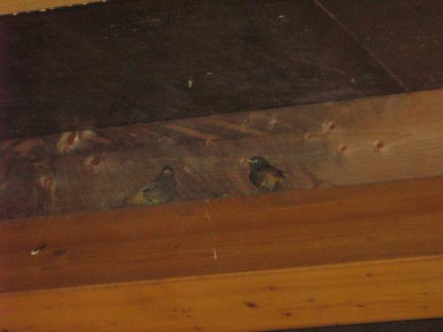 Leem smerenEr waren uilen in het huis komen wonen.We hebben ze buiten een mooi plekje gegeven waar ze nu nog steeds wonen.